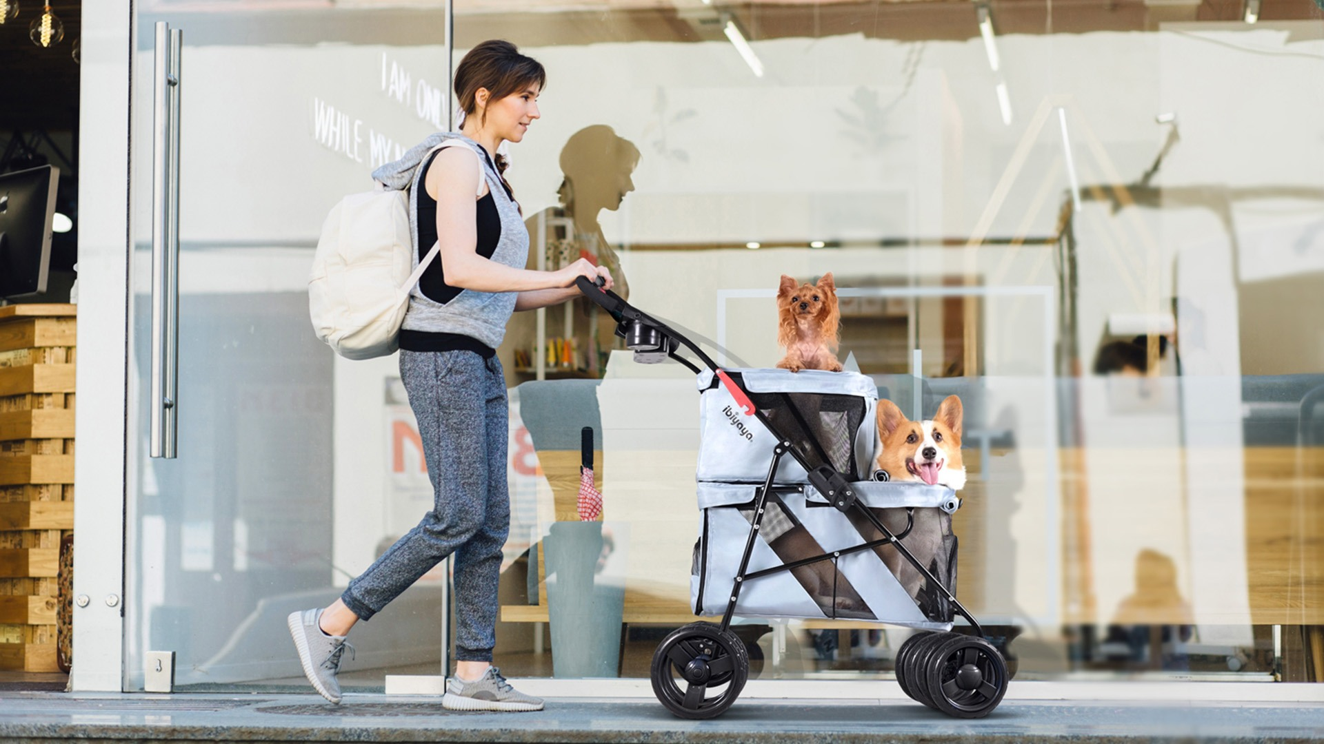 Collapsible Double Dog Carrier