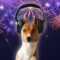 Fireworks-Preparing your Pet!